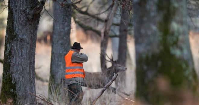 ANALYSES : tableaux de chasse (1/5)   Chasseurs de l'Est